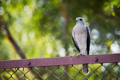 Bird Watching for Seniors